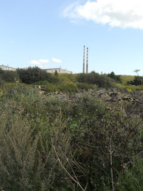 Hiking through the brush near Sandymount Strand on the way to Poolbeg Lighthouse