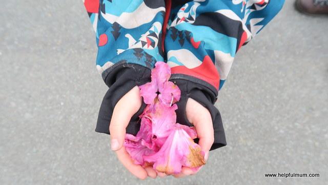petals in hands