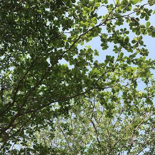 ปลูกต้นไม้ดูดสารพิษ/ฟอกอากาศ ช่วยแก้ปัญหามลพิษ