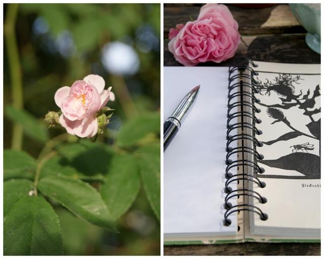 Ramblerrose Pauls himalayan musk und Notizbuch Das Wiesenbuch