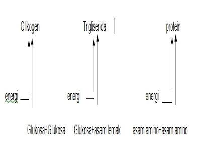 Metabolisme Gliserol dan Asam Lemak