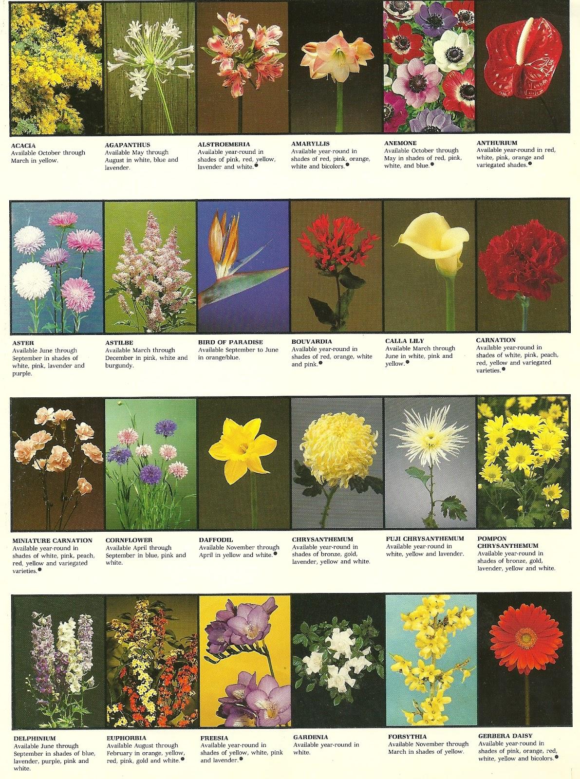 Siamgodh las flores y sus nombres for Plantas decorativas con sus nombres