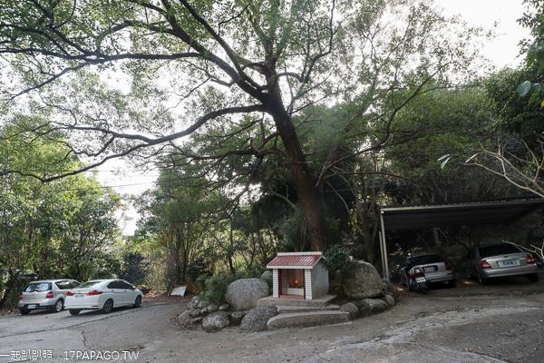 新社風林谷賞梅花炮仗花還有日式小木屋,老樟樹下休息好愜意