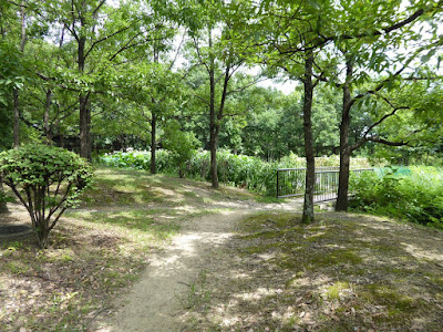 花博記念公園鶴見緑地  自然体験観察園