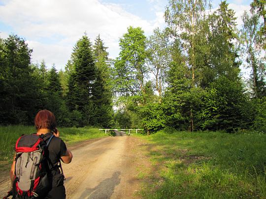 Zbliżamy się do skraju lasu.