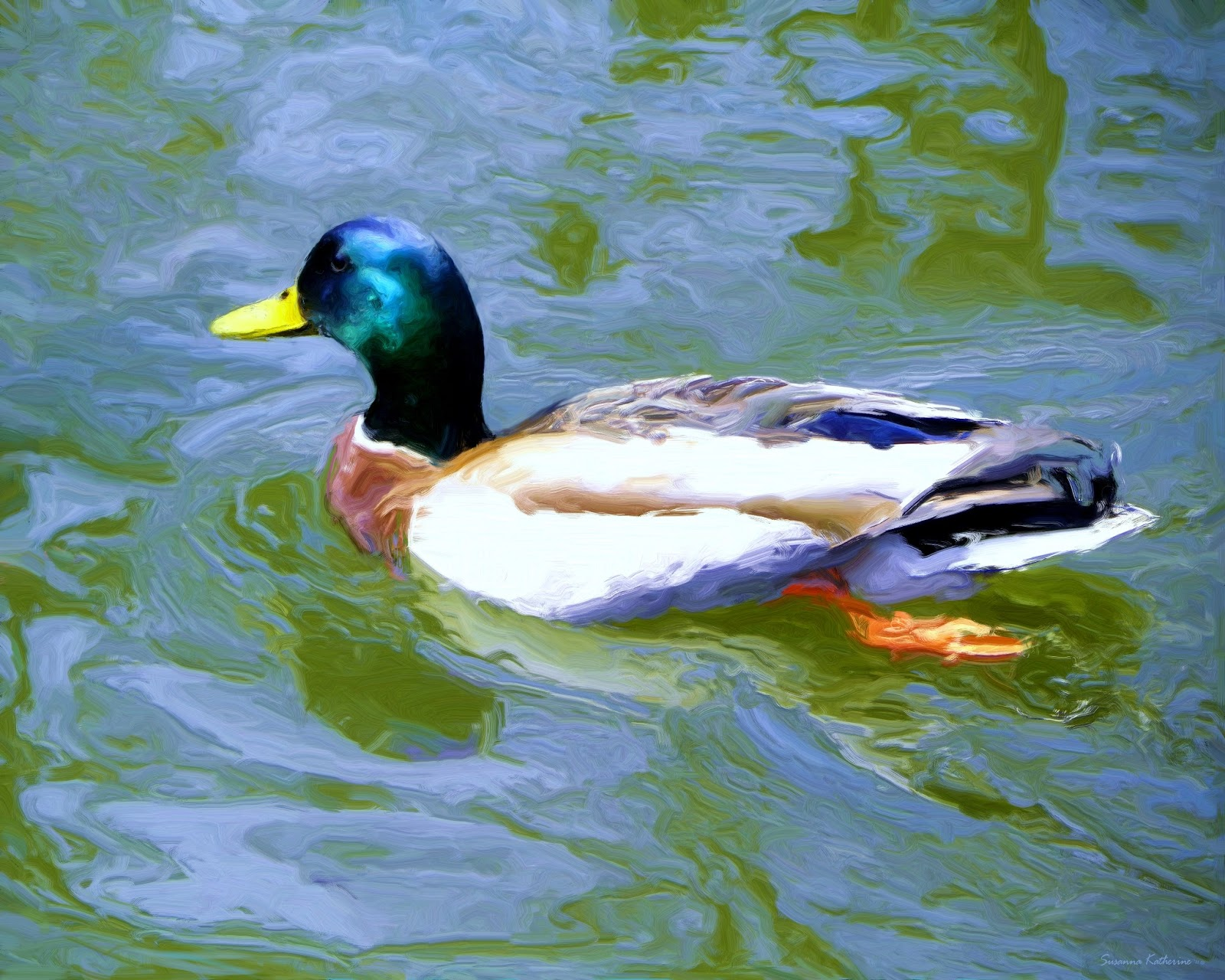 Nature S Variety Duck