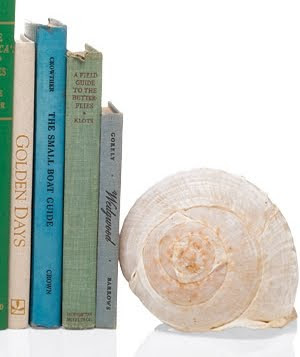 large shell used as bookend