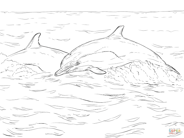 Click The Short Beaked Mon Dolphin Coloring Pages To View Printable  Version Or Color It Online Patible With Ipad And Android Tablets