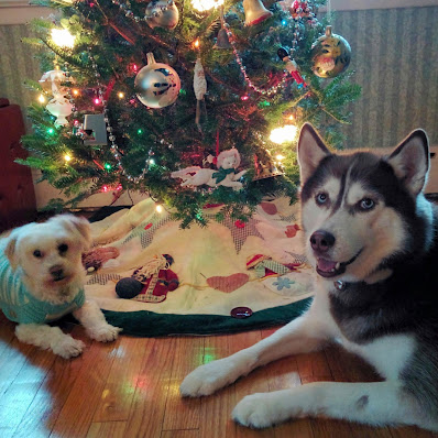 Dog health, Healthy dog product, How to keep a dog healthy, Healthy pets