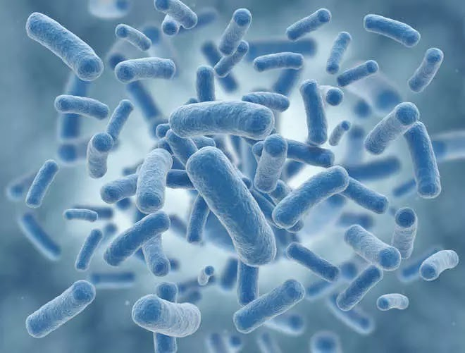 Potentially deadly bacterium becoming drug resistant