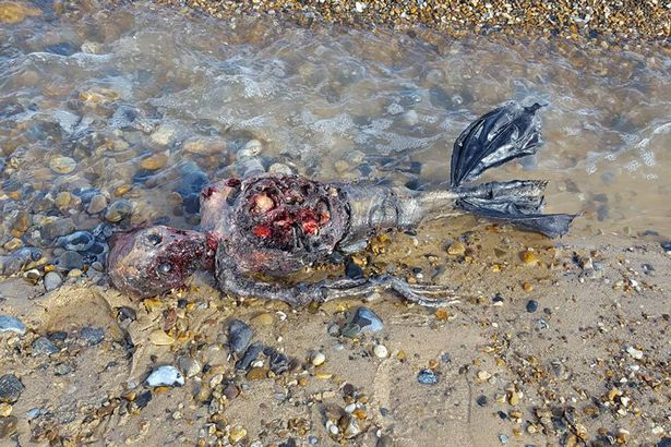 Decaying Body Of 'Dead Mermaid' Washed Up On British Coast. Is This Evidence Of Actual Mermaid Sighting?