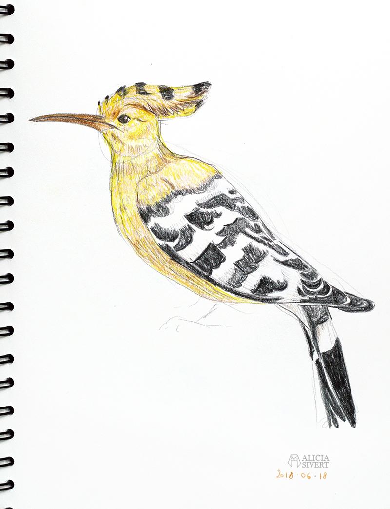 Teckningsutmaningen i juni, foto av Alicia Sivertsson. aliciasivert teckning teckningar teckna rita skiss skissa skapa skapande utmaning kreativitet skaparutmaning bloggutmaning månadsutmaning kreativ penna pennor akvarellpenna akvarellpennor illustration härfågel fågel