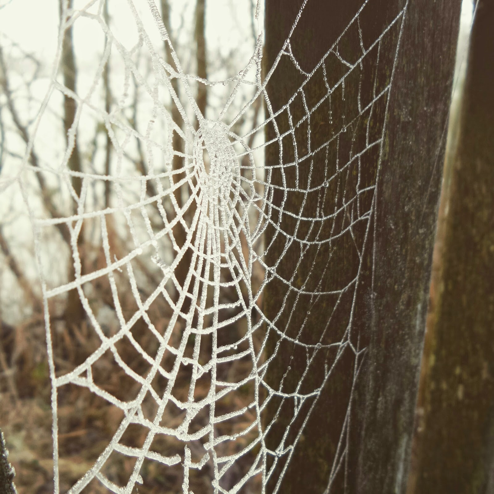 An icy Spider Web