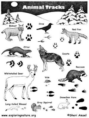 Jejak Binatang