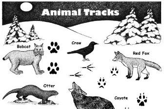 Cara Mengenali Jejak Binatang Ketika Mendaki Gunung