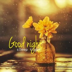 Best good night Pictures HD download Flower Good Night wallpaper pics good night images for Whatsapp free download