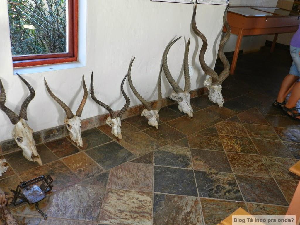 safári no Shamwari Game Reserve