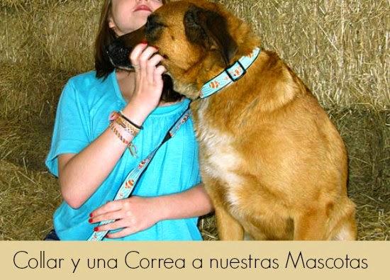 Como hacer un Collar y una Correa a nuestras Mascotas en Macrame