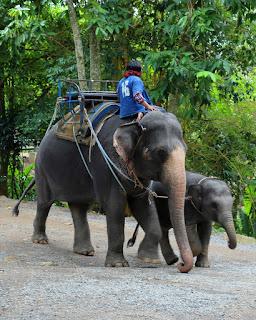 Elefanti, madre e figlio, alle cascate Namuang
