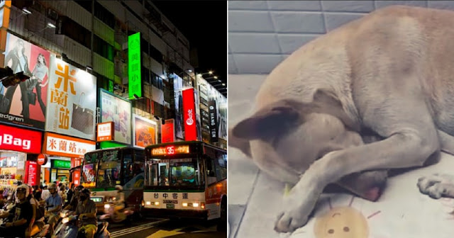 Σκύλος περιμένει επί 6 μήνες τον ιδιοκτήτη του χωρίς να ξέρει πως εκείνος τον έχει εγκαταλείψει