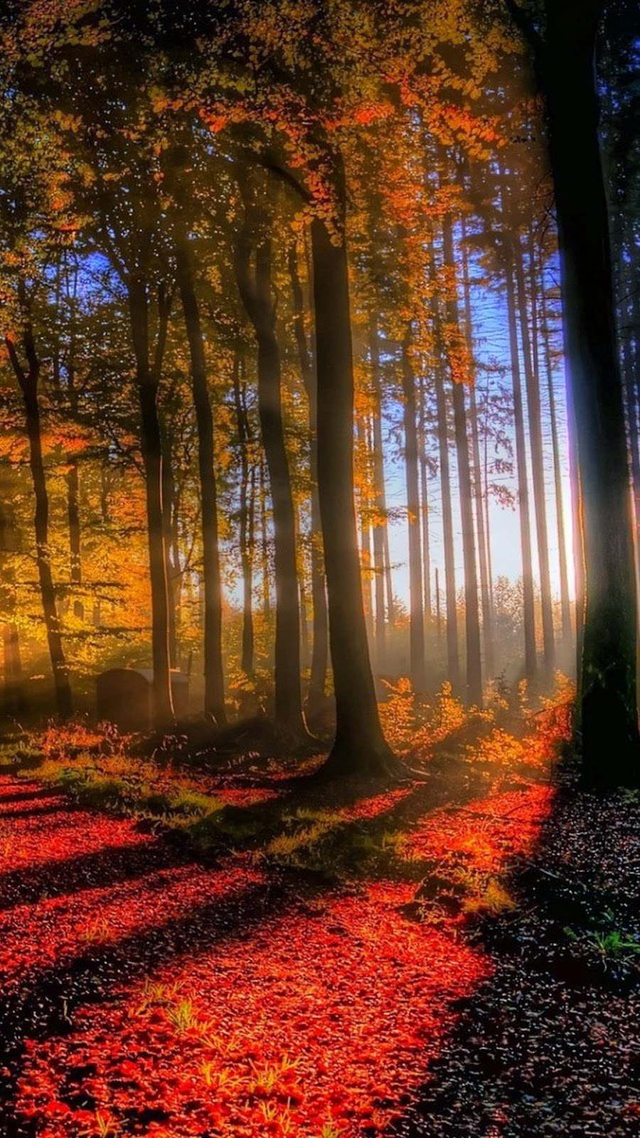 Fall Wallpaper Hd For Galaxy S4 Sony Xperia E3 Wallpapers