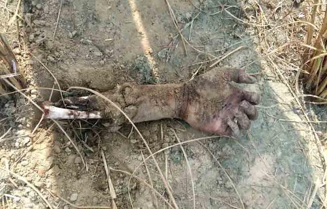 dead-body-found-kaboolpur-greater-faridabad-tigaon-haryana