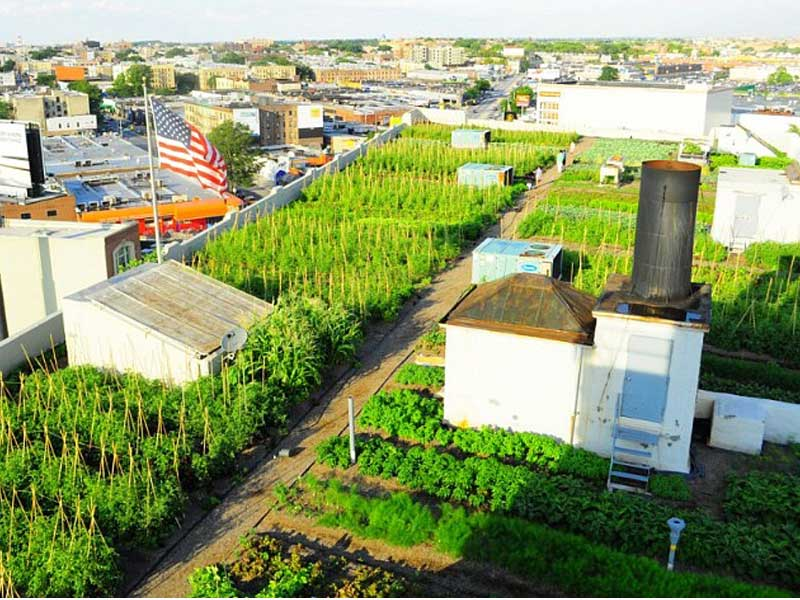 jardinitis: Huertos originales