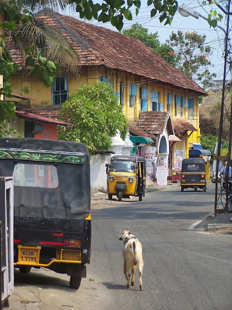 Une chèvre qui se promène dans Fort Kochi