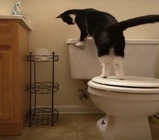 Gato aprendeu a dar descarga e conta de água aumenta assustadoramente...