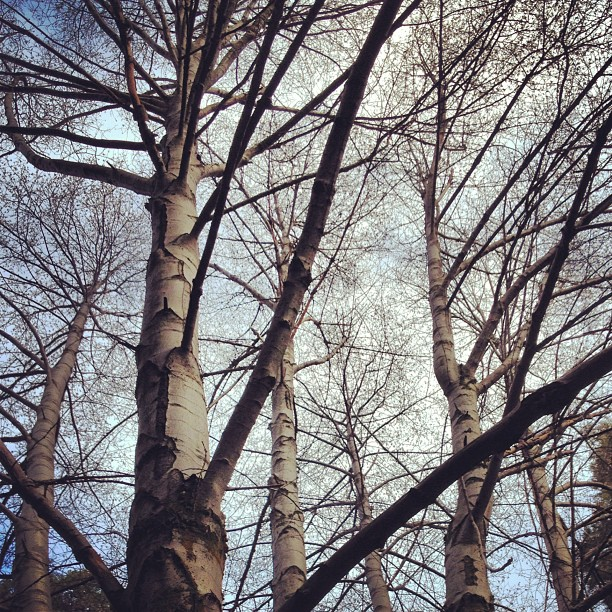 naked trees, branches, sky