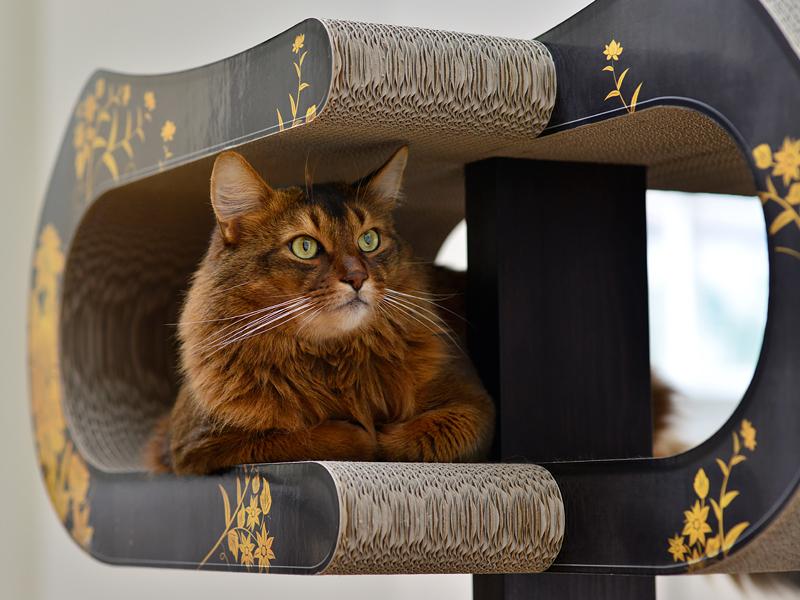 design kratzbaum aus holz und wellpappe design kratzb ume und m bel f r katzen. Black Bedroom Furniture Sets. Home Design Ideas
