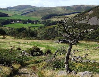 Tree Northumberland