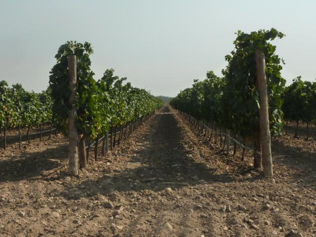 De Vino En Vino From Wine To Wine Bodega Divina Proporcion Toro