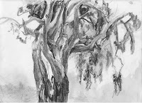 Eucalyptus Tree Central Coast by Mary Highstreet