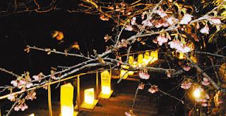 夜桜のライトアップ開始 八重瀬公園