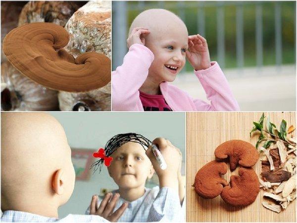 Tác dụng của nấm linh chi trong chữa trị ung thư