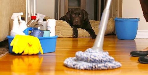 شركة تنظيف في الرحمانية, أفضل شركة تنظيف بالرحمانية الإمارات