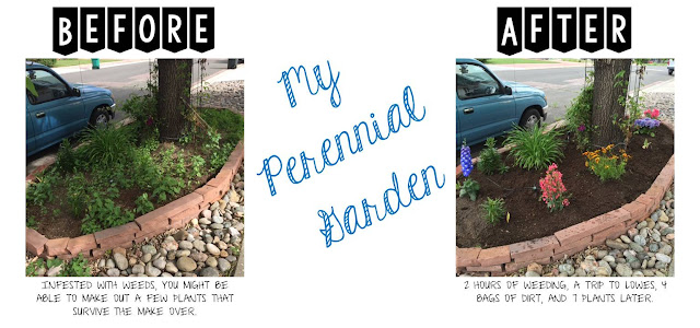 My Perennial Garden - Before & After