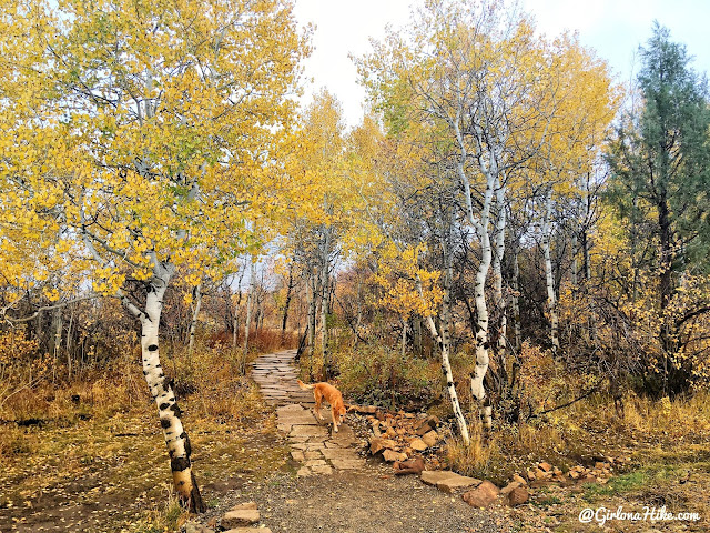 Run-a-Muk Dog Park & Trail, Kimball Junction, Park City, Utah. Hiking in Utah with Dogs