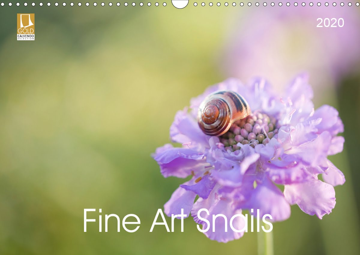 New Snail Fine Art Calendar 2020