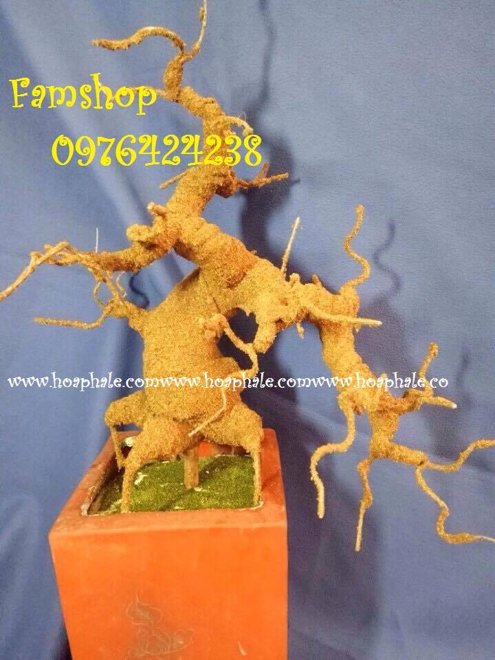 Goc bonsai mai dao tai Pham Thuan Duat