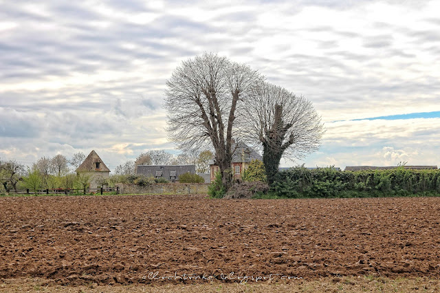 rolnicze tereny Normandii wiosną