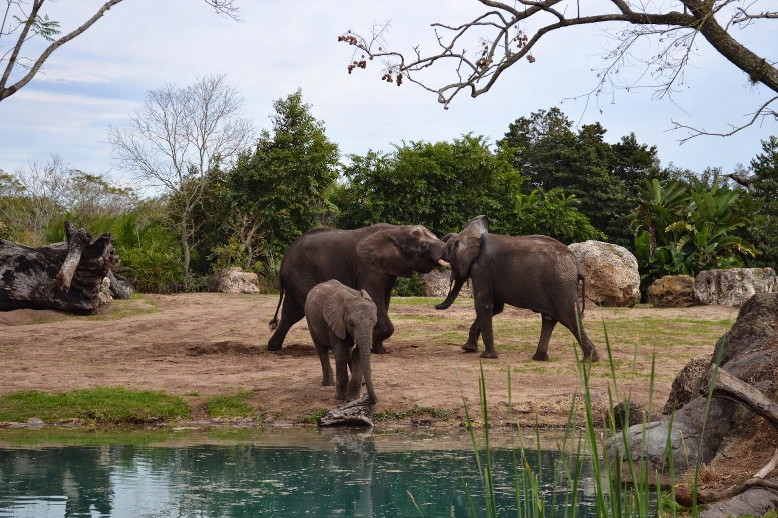 Animal Kingdom at Walt Disney World