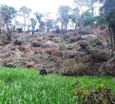 Polícia ambiental encontra desmate ilegal em Ivaiporã