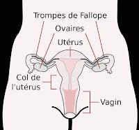 un risque de cancer de l'ovaire multiplié par deux