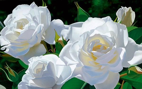 White roses pictures gallery newwallpapers beautiful white roses for picture gallery arts and entertainment mightylinksfo