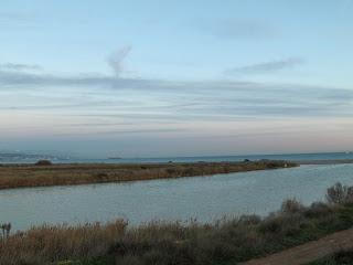 Técnicos de Athisa y Agentes de Medio Ambiente detectan el aumento de mosquitos en la desembocadura del Guadalhorce