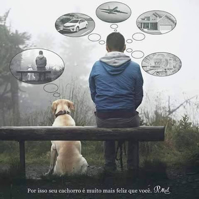 pensamento humano vs cão