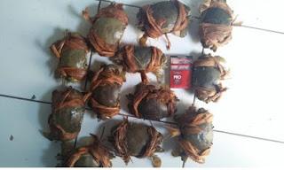 kepiting ready pada bulan puasa