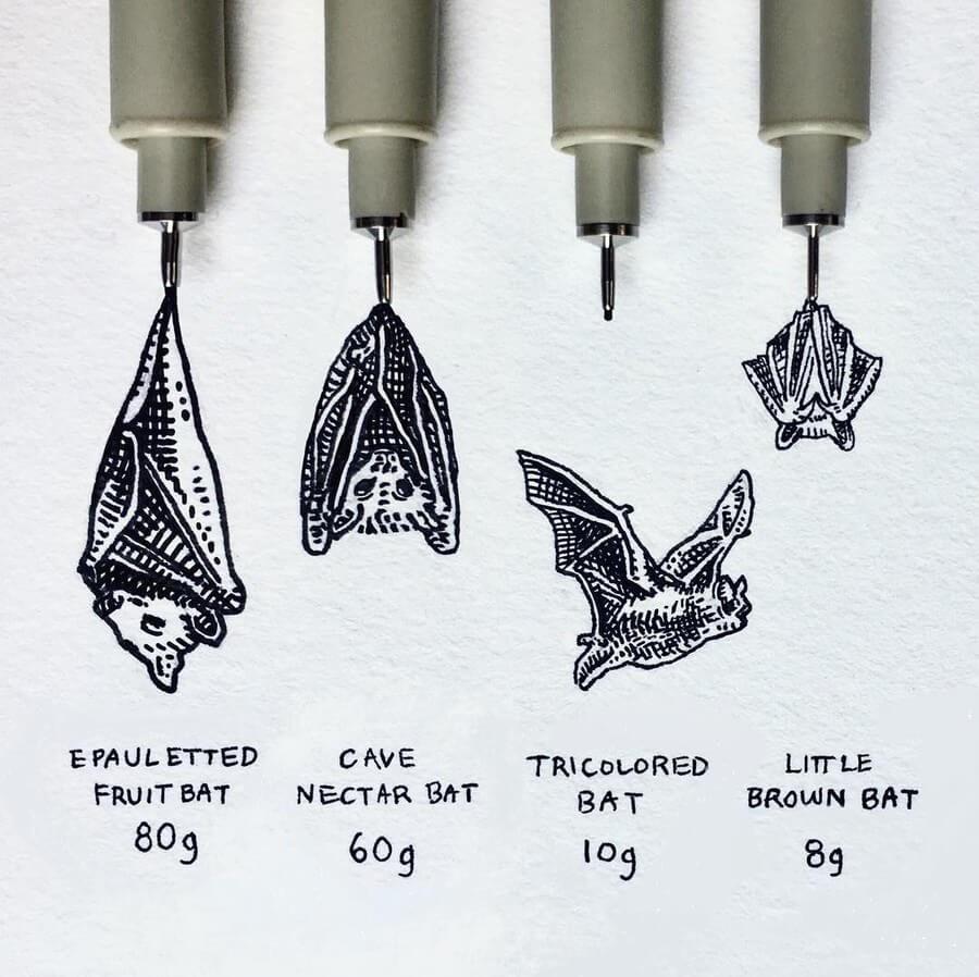 03-Bats-August-Lamm-www-designstack-co